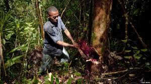 Tala indiscriminada de Bosques